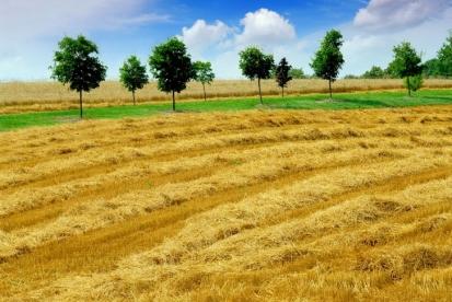 Laveste-kornavling-paa-37-aar-gjoer-det-noe-da_image_slider